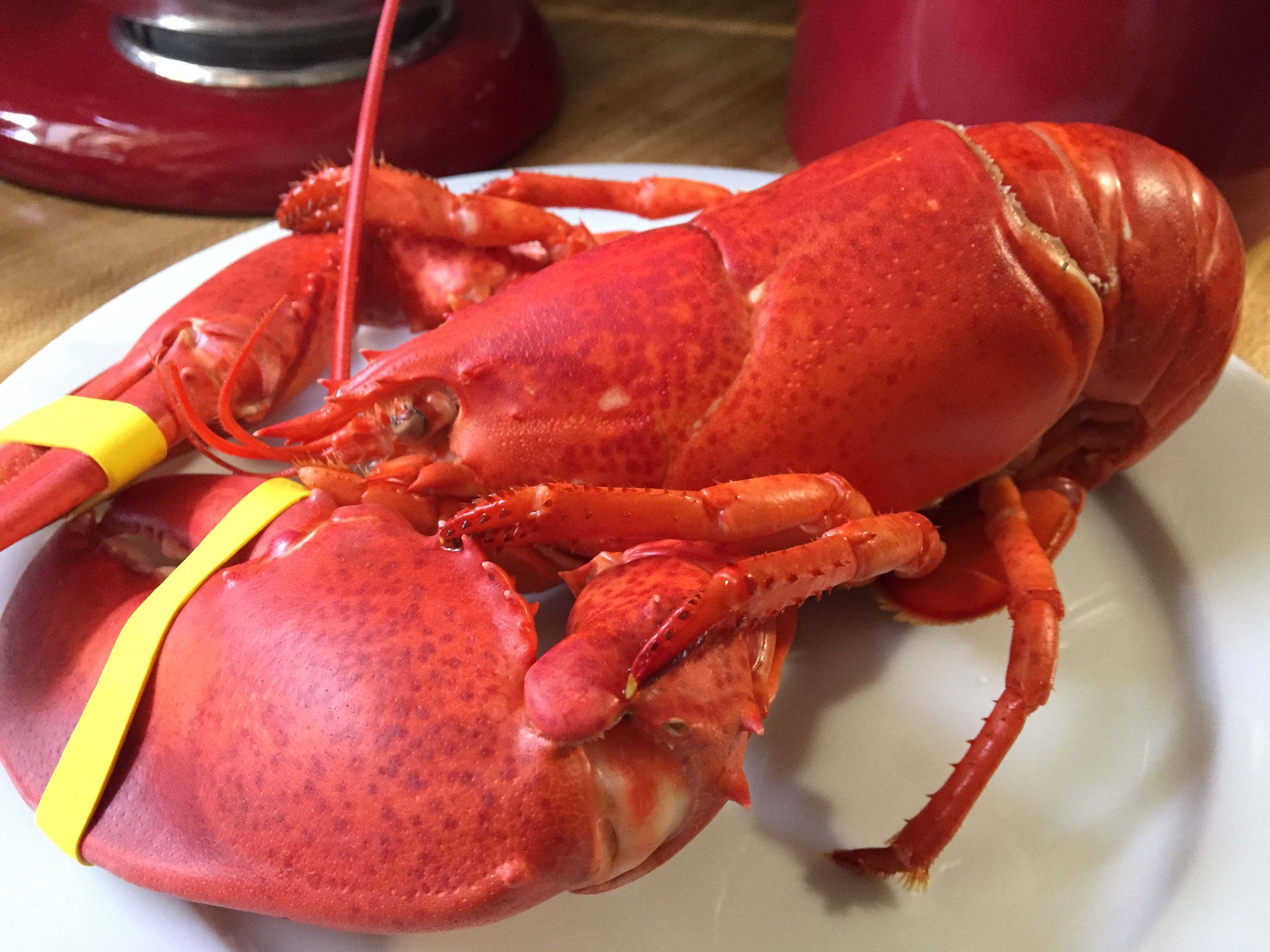 Maine Lobster.jpg